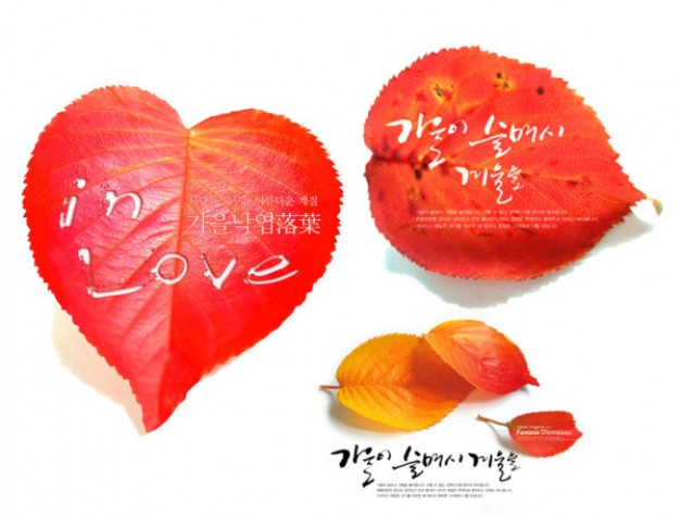 autumn red leaves series material with love sign