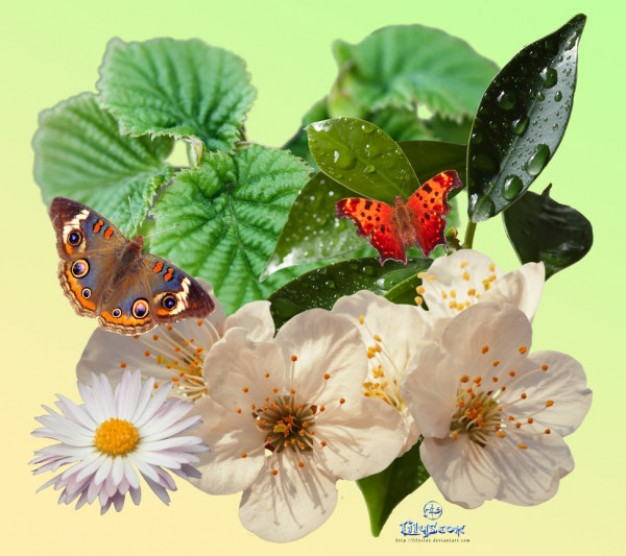 spring pack plant butterfly material like leaf mum flower