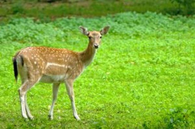 Chronic wasting disease damhirsch Indianapolis Star about Selective breeding New York City United St