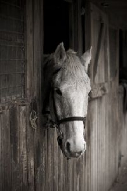 Equestrian white Sports horse through a window about Riding Stables Scotland
