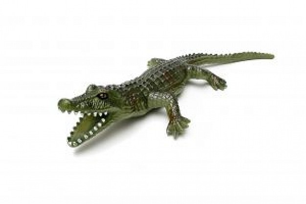 Alligator alligator plastic toy about Journal of Experimental Biology National Science Foundation