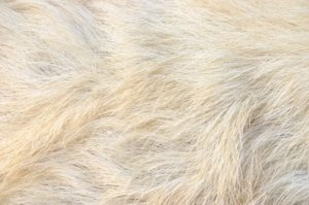 animal fur about India Chiffon cake