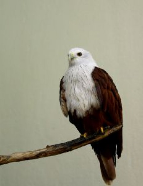 Bird regal eagle standing on branch about Biology Zoology