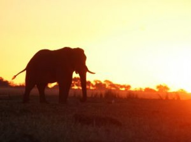 Botswana africa with sunset background about Namibia Chobe National Park
