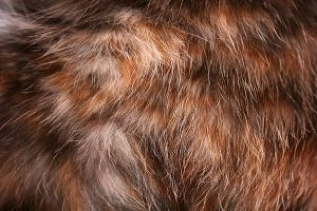 Cat Recreation fur about Pets