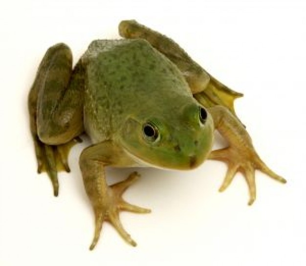 Costa Rica frog about Spain