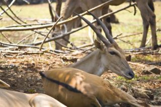 Deer Hunting buck mating at farm about Antler Game
