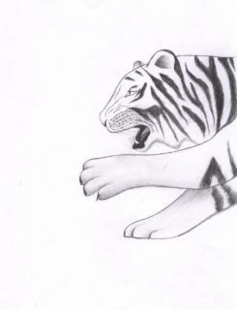 Drawing tiger Visual arts sketch about Pencil art
