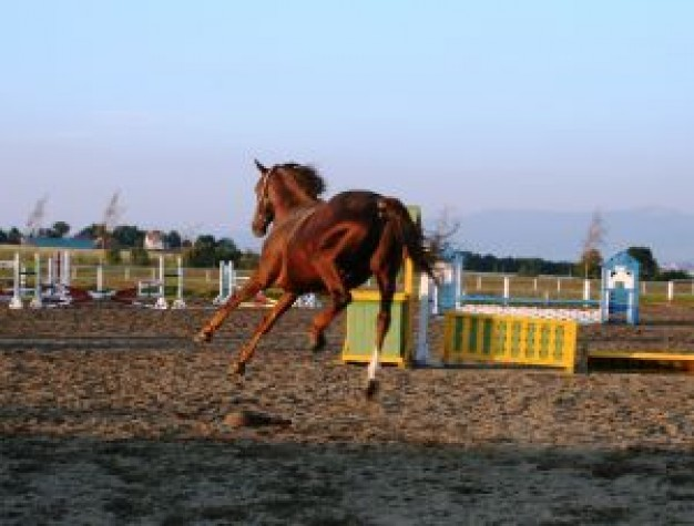 horse Dog jumping about Hors d'oeuvre Hor Nambora