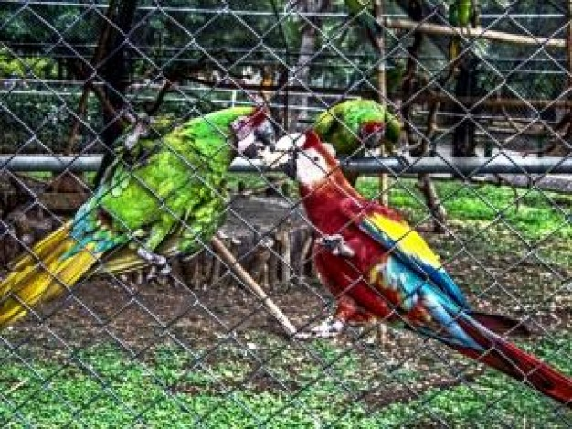 Parrot zoo Macaw parrots nature pet about Bird Species