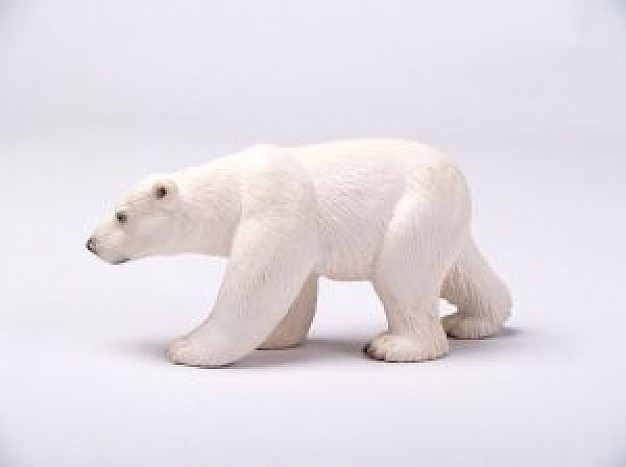 polar Bear side view about Biology Flora and Fauna