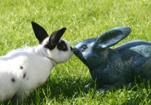 Rabbit artificial Pets kiss about Recreation Hare