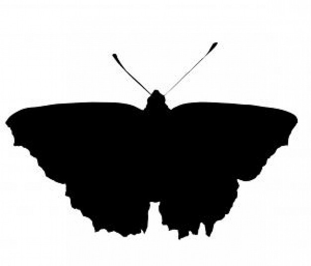 a butterfly silhouette in top view