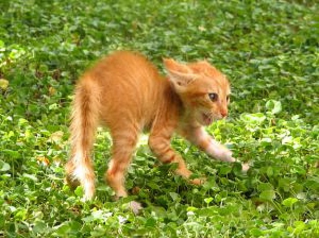 angry kitten walking in grassland with flowers