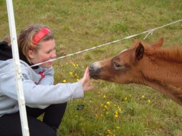baby horse and girl at grassland