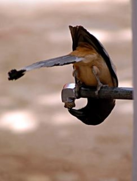 Bhopal thirsty Madhya Pradesh bird bhopal in bottom view about India Asia