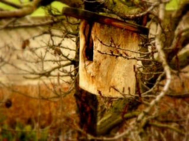 bird box in tree at field