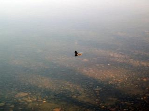 bird flying over alone water with reek