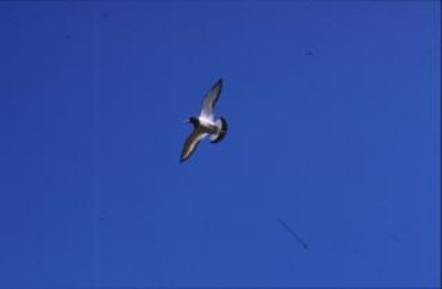 bird glide flying over blue sky