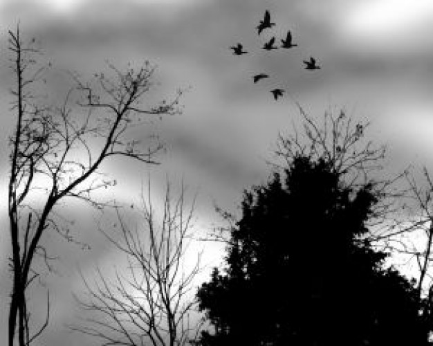 Bird trees Recreation backlight and flying birds at a cloudy day about Cloud