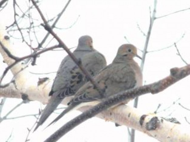 birds couple standing on winter branch
