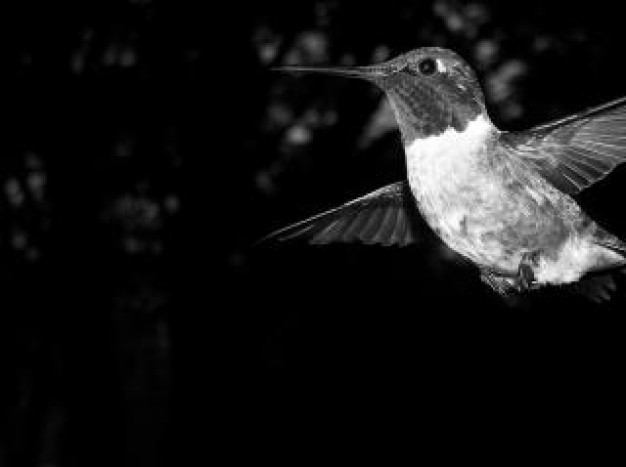 black and white bird with dark background