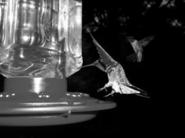 black and white thirsty birds feathers in night