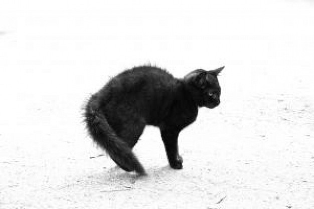 black cat apillor sitting sand beach