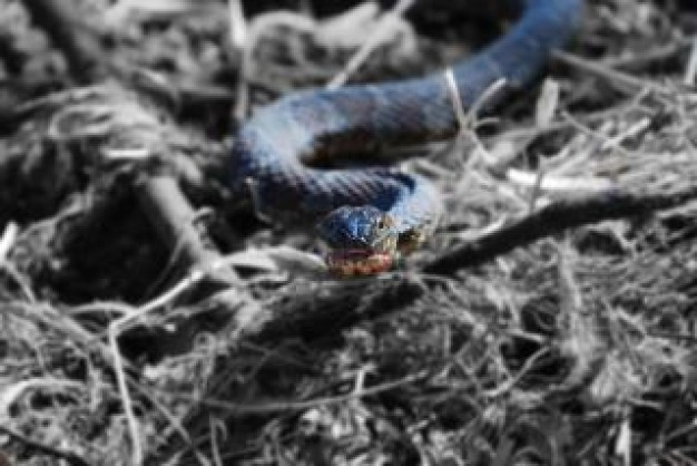 blue snake eyes cold crawling over dried grass