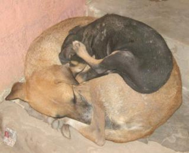 brown mother dog and black child stray dogs