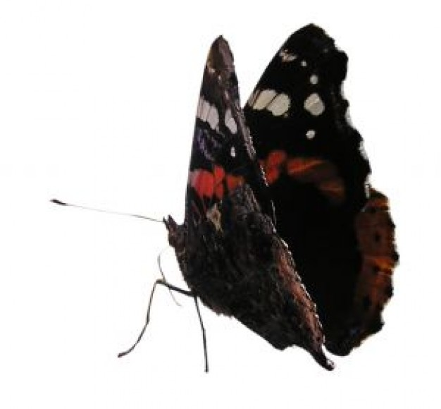 Butterfly Antenna in red and black with white spots about Shopping Jean Paul Gaultier