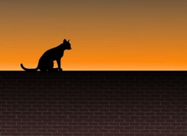 cat on a brick wall with orange sunset background