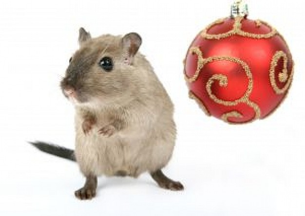 christmas rodent and Christmas ball