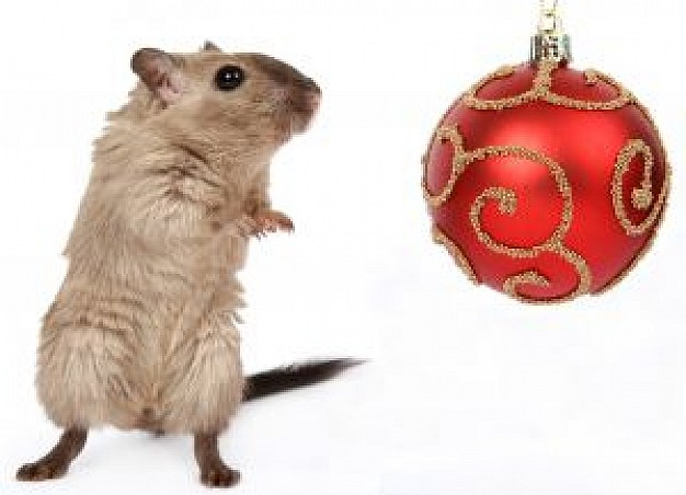 christmas rodent standing beside christmas ball