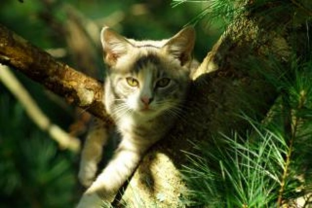 cute cat in pine tree fur