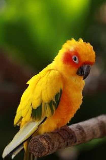 cute parrot stopping at stick with nature background