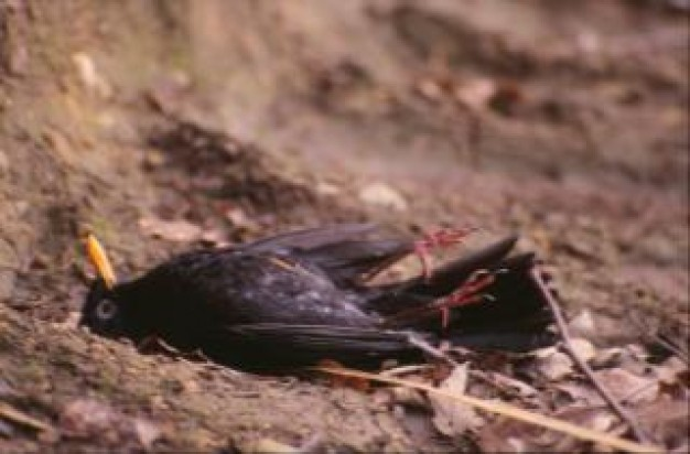 dead bird lying at earth floor