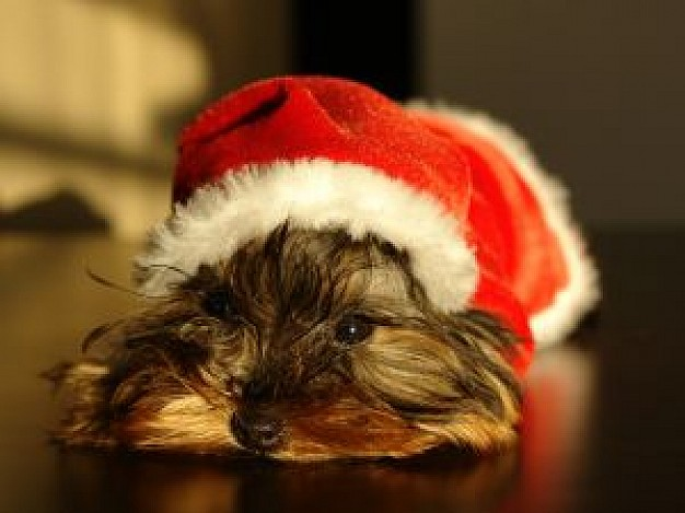 doggy with Christmas hat on the head lying floor