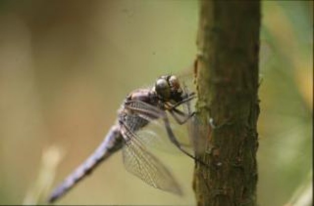 dragonfly animal macro stopping at trunk with nature background