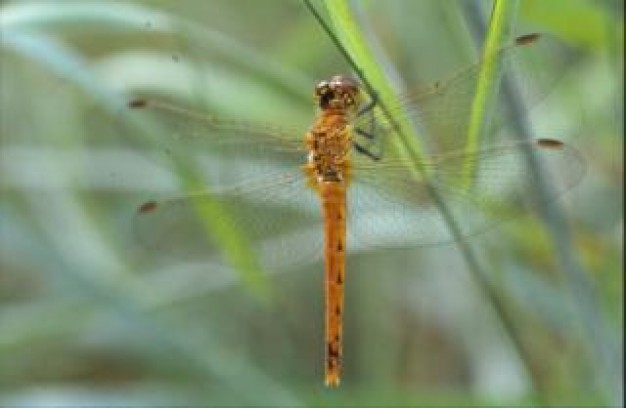 dragonfly macro animal stopping at grass stick