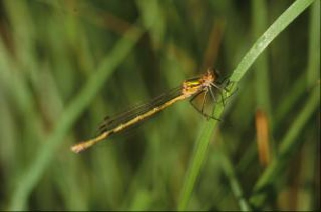 dragonfly macro animal stopping on grass close-up