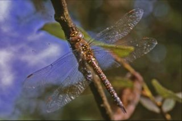 dragonfly macro wings stopping on stick of water