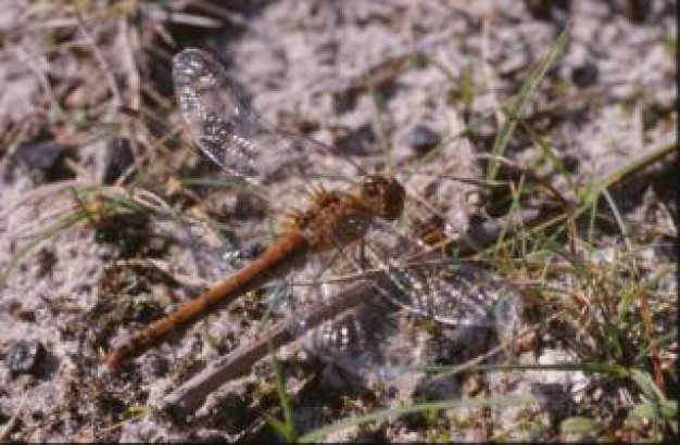 dragonfly stopping at floor grass close-up insect animal