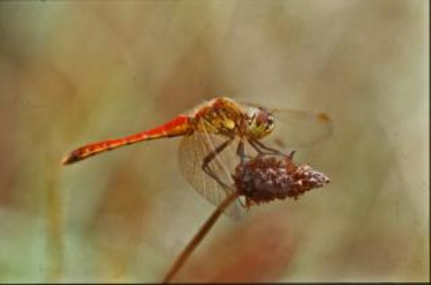 dragonfly wings insect stopping on grass fruit