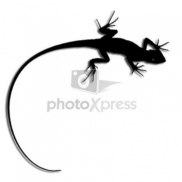 gecko silhouette in top view that insect meeting animal