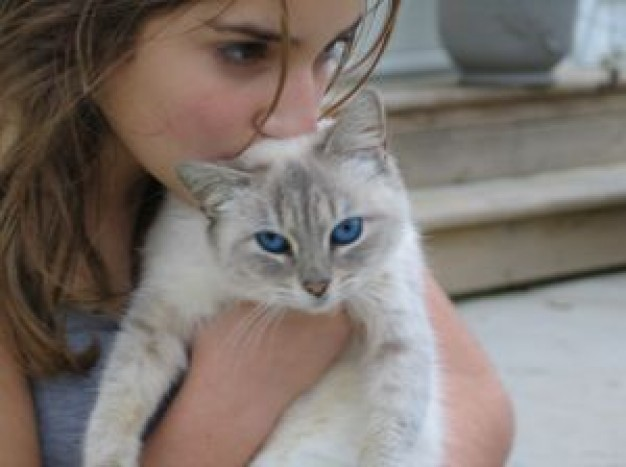 girl kiss cat with blue eyes indoor