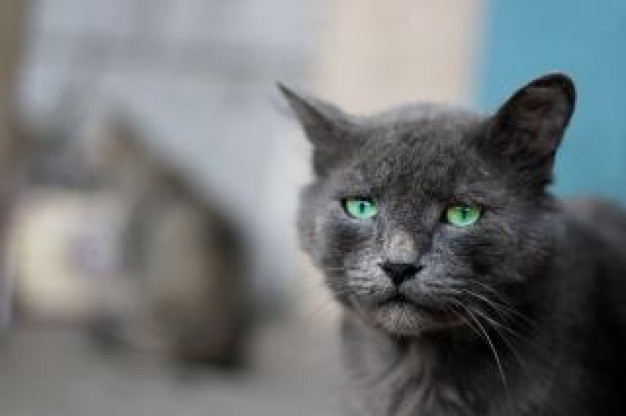 gray cat outdoor with sad expression