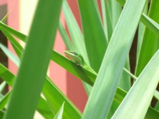 green anole plants of nature with pink things background