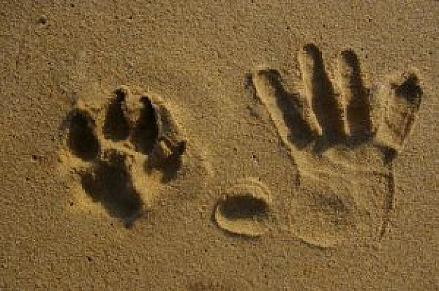 hand prints and animal print in beach
