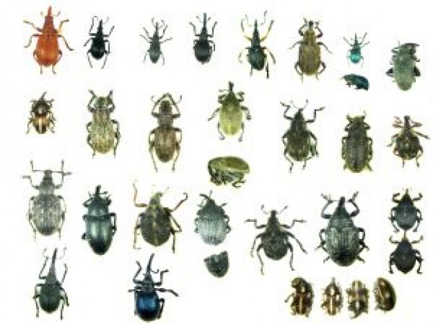 insect Biology specimen world about Recreation Science and Nature